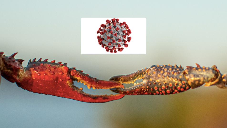 A dupla nefasta: Câncer e COVID-19